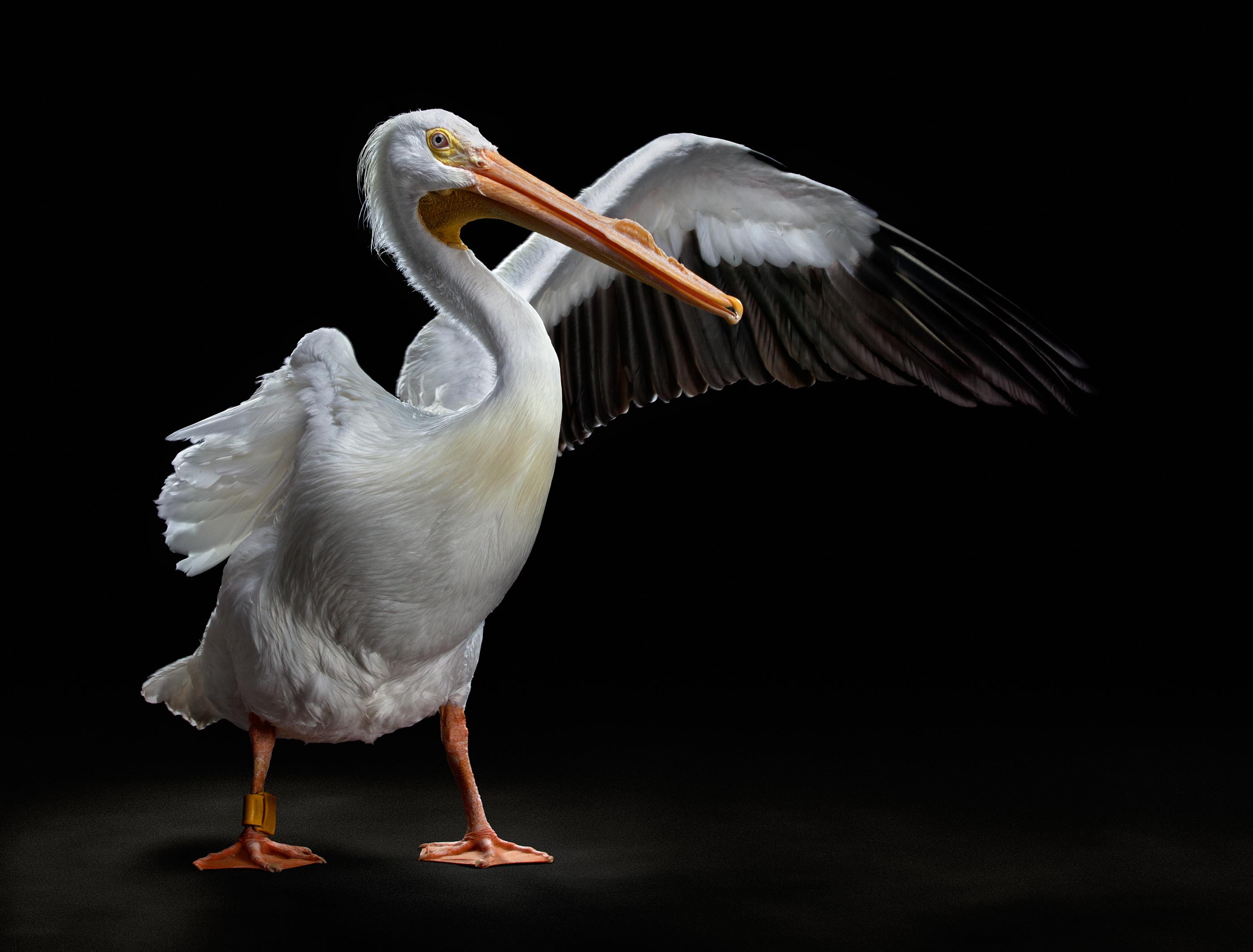 tampa-commercial-animal-photographer-bob-croslin-birds-03