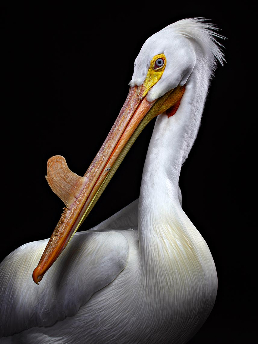 tampa-commercial-animal-photographer-bob-croslin-birds-07