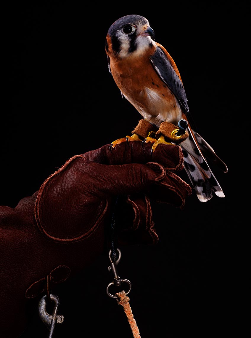 tampa-commercial-animal-photographer-bob-croslin-birds-11