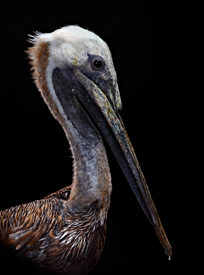 tampa-commercial-animal-photographer-bob-croslin-birds-12