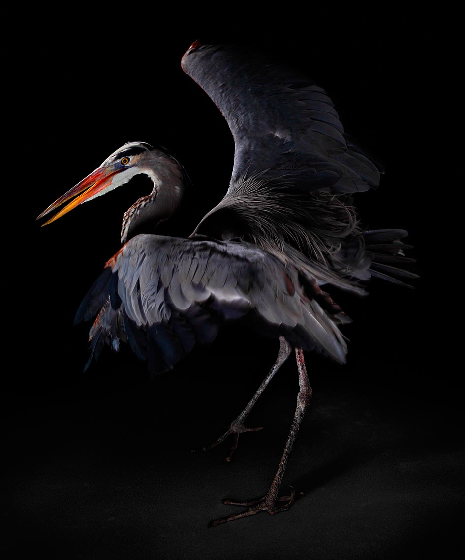 tampa-commercial-animal-photographer-bob-croslin-birds-15